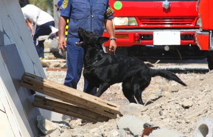 災害救助犬の活躍(2010年堺市総合防災訓練)
