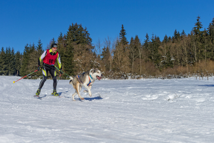 german championship in sled dog races in frauenwald 2015