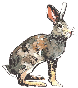 卯 うさぎ ウサギ 干支 十二支