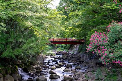 竹林の小径を流れる川と赤い橋(伊豆・修善寺)