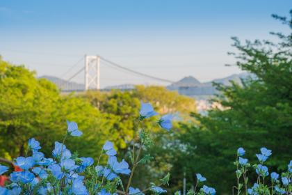 春の火の山公園に咲く綺麗な花畑から眺める関門海峡