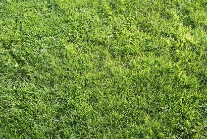 芝生の素材
