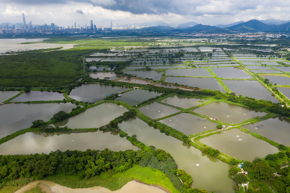 Top view Fish hatchery pond in Hong Kong