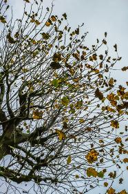紅葉・葉が落ちる