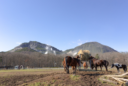 日本の北海道東部・11月の牧場、放牧された馬