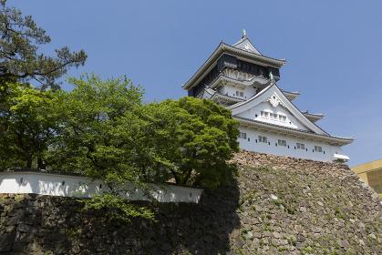 新緑の小倉城天守閣 福岡県北九州市