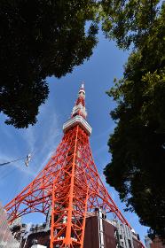 東京タワーと緑
