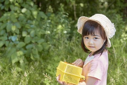 虫取りをする日本人の女の子