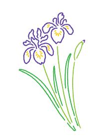 こどもの日・菖蒲の花のイラスト