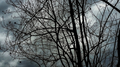 Bare branches under a cloudy sky