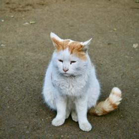 cat,猫,ネコ,ねこ,Katze,chat,gatto,gato,feles,кошка,KAT