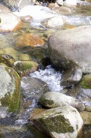 初夏の渓流