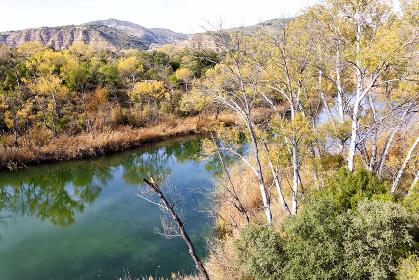 Riparian vegetation in autumn. Tagus (Tajo) River as it passes through Zorita de los Canes in Guadalajara. Spain. Zorita de los Canes is a Spanish municipality in the province of Guadalajara