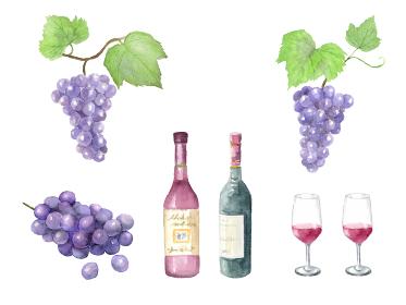 ぶどうとワインの水彩イラストセット
