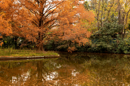 紅葉した大きな木と池