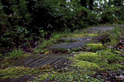 苔むした石畳