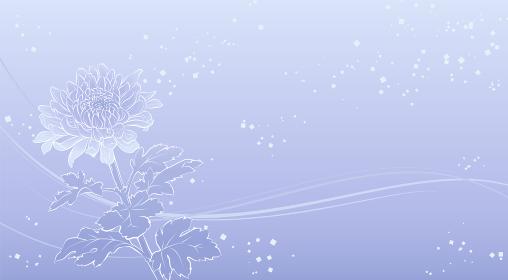 上品な菊の花の背景イラスト(薄紫)