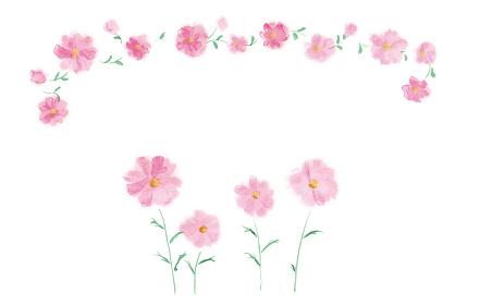 和風手描きイラスト素材 植物・花、コスモス、秋桜、秋、花