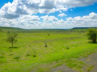 タンザニア・ンゴロンゴロ自然保護区にて車窓からサバンナ地帯の眺め