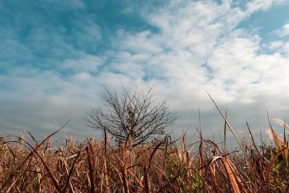 冬の青空と枯れ野原