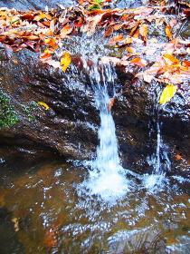 鎌倉紅葉谷の落ち葉と沢水