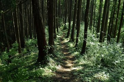 御岳山の登山路から眺める樹々(奥多摩・東京都)