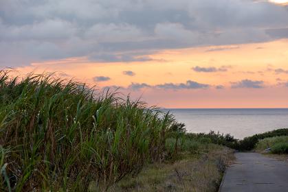 日本最南端、波照間島・サトウキビ畑の夕景
