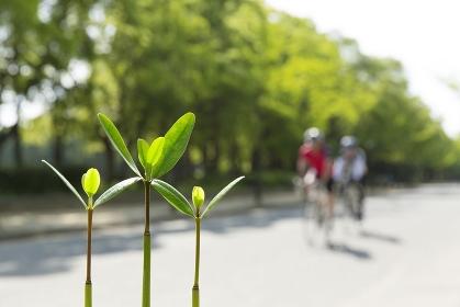 新芽とサイクリング