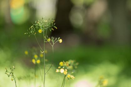 木漏れ日の中の黄色い小さな花