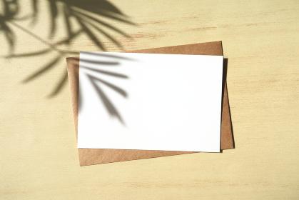 テーブルヤシの影と白いカード 2