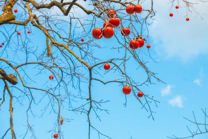 秋の爽やかな青空と柿
