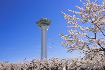 北海道 函館市 五稜郭公園 満開の桜と五稜郭タワーと鯉のぼり