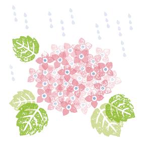 梅雨 雨と紫陽花の花