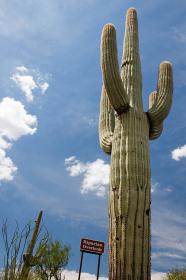アメリカ・アリゾナ州のサワロ国立公園にて荒野の大地に生える巨大サボテンと青空