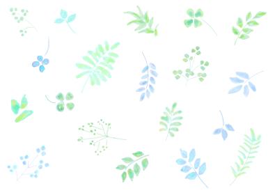 植物イメージのパターン