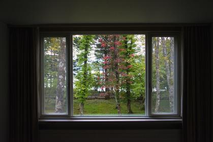 窓からの美しい庭の景色