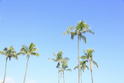 ハワイの空とヤシの木