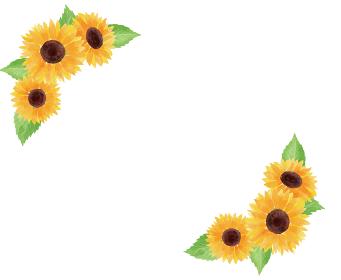 ひまわり ヒマワリ 向日葵 枠 フレーム 夏 花 イラスト 手描き