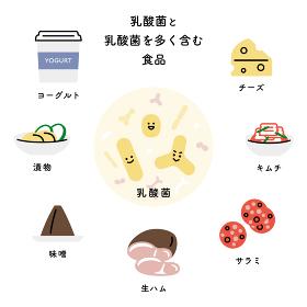 乳酸菌と乳酸菌を多く含む主な食品(日本語)