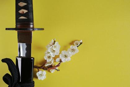 黄色い背景に少し抜いた日本刀と白い花が咲いた梅の枝