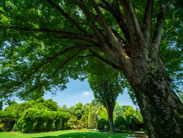 夏空と枝を伸ばした大樹