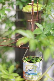 いろいろなディスプレイが可愛い多肉植物