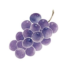 ぶどう 秋 果物 フルーツ 水彩 イラスト