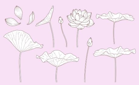 シンプルな蓮の花のイラスト(線画)