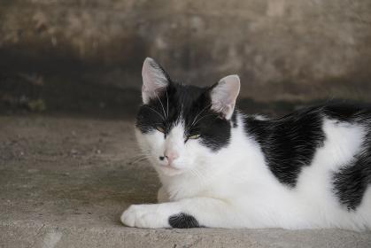 たくましく生きる野良猫