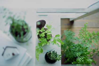 インドアグリーンとDIYの木の棚のイメージ写真