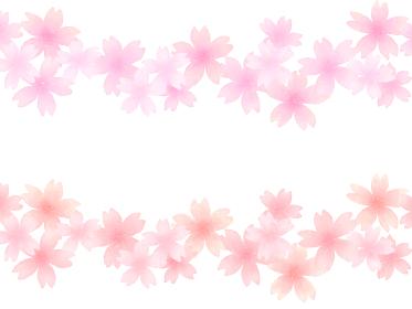 ピンクとレッド 2色の桜ラインセット