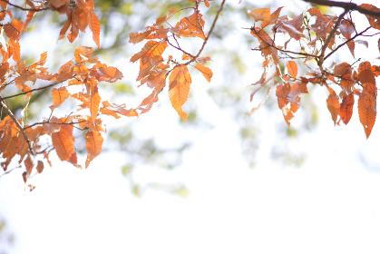 明るい秋の写真