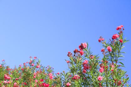青空と南国の花