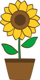 鉢に入った向日葵の花